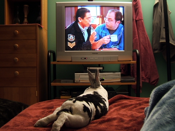Corner Gas: The Movie bunny